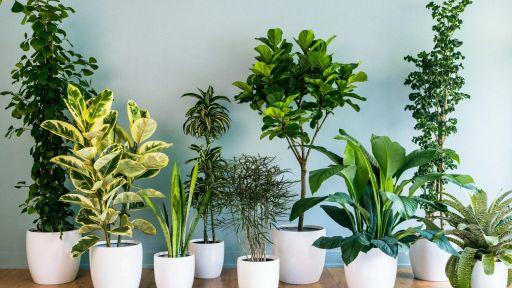 Kambariniai augalai: kuo jie naudingi mūsų akims?