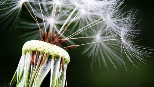 Alergija: kaip ji paveikia mūsų regėjimą ir kaip nuo jos apsisaugoti?