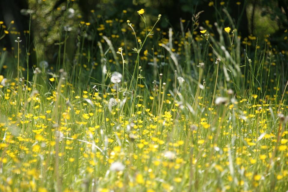 Pavasarinė alergija – kaip ji paveikia mūsų akis ir kaip ją sušvelninti?